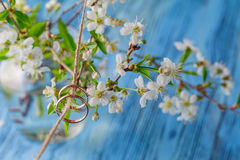 Wedding ring with spring cherry flowers background Royalty Free Stock Images