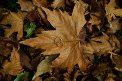 Wedding Ring top on leaf Stock Photos