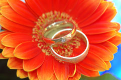 Wedding rings. Two wedding rings lying on chrysanthemum Stock Photos