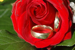Wedding rings. Wedding rigns lying on red rose Stock Photography