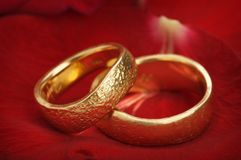 Wedding rings. Two wedding rings on a red rose Stock Image