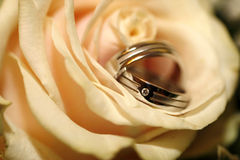 Wedding rings. With diamond in a rose royalty free stock image