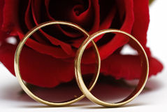 Wedding rings. Royalty Free Stock Photo