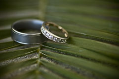 Wedding rings. His and hers wedding rings on a palm leaf Royalty Free Stock Images