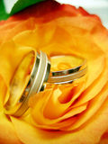 Wedding rings. Two wedding rings on the yellow rose Stock Images