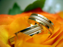 Wedding rings. Two wedding rings on the yellow rose Royalty Free Stock Images