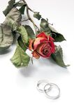 Wedding rings. Two wedding rings and dry red rose Stock Image