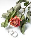Wedding rings. Two wedding rings and dry red rose Stock Photography