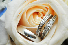 Wedding rings. In a rose Royalty Free Stock Photo