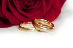 Wedding rings. With a background rose Stock Photo