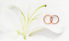 Wedding rings. And white lily Royalty Free Stock Photography
