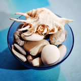 Wedding rings. Two gold wedding rings on shells and pebbles Royalty Free Stock Photo
