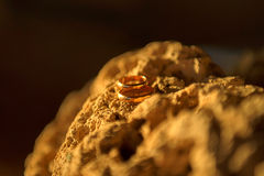 Wedding rings. Lie on the coral stock photo
