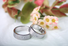 Wedding rings. Pair of white gold wedding bands Stock Photography