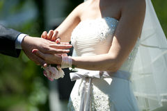 Wedding rings. Wedding bride holding a wedding ring Wear the ring for the groom Stock Photo