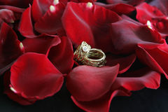 Wedding rings. Lying on a bed of roses Royalty Free Stock Photos