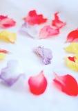 Wedding rings. Around petals flowers Stock Photo