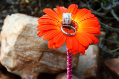 Wedding Rings. In a bright orange flower stock photo