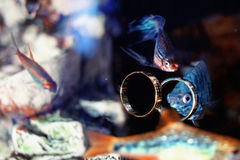 Wedding rings in the aquarium with colorful fish Stock Photography