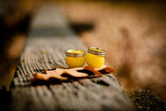 Wedding rings. On autumn leaves Royalty Free Stock Photography
