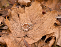 Wedding rings on the autumn leaves Stock Image
