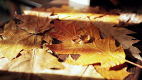 Wedding rings with autumn leaves. On a wooden texture stock video footage