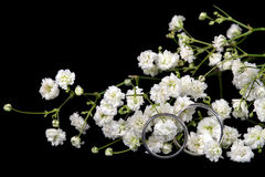 Wedding rings in baby's breath. Pair of silver wedding rings in white baby's breath isolated on black Royalty Free Stock Photos