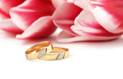 Wedding rings on a background. Wedding rings and pink tulip Stock Images