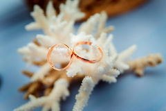 Wedding rings on a background of corals Stock Images