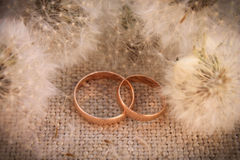 Wedding rings on the background dandelions Stock Photo