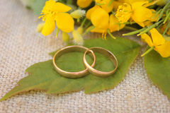 Wedding rings on the background of yellow flowers Stock Photos