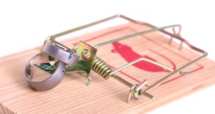 Wedding rings bait in a mousetrap, concept marriage of convenience, contract. On white royalty free stock image