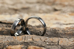Wedding rings in bark of tree Royalty Free Stock Image