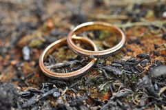 Wedding rings on barren ground Stock Images