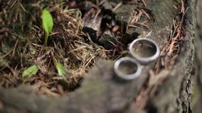Wedding rings on a beautiful background. They lie on a beautiful and unusual forest stump stock footage