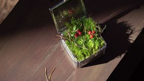 Wedding rings in a beautiful box with moss stock footage