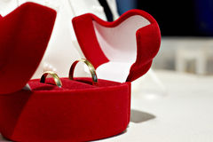 Wedding rings in a beautiful case Royalty Free Stock Photography