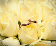 Wedding rings on the beige roses close up Stock Photos