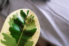 Wedding rings in big green leaf background royalty free stock image