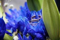 Wedding rings on a blue stock photography