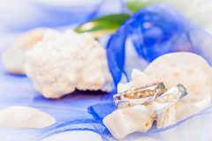 Wedding rings. With blue ribbon and shells Stock Photo