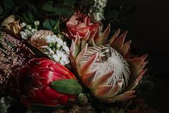 Wedding rings on a bouquet of a bride. In a flower of a protea Stock Photos