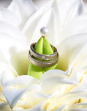 Wedding rings in bouquet. Wedding rings in bright bouquet Royalty Free Stock Photo