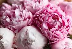 Wedding rings on the bouquet. Wedding rings on a bouquet of peonies Royalty Free Stock Image