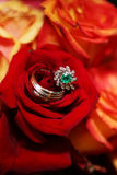 Wedding Rings on Bouquet - Red Roses. Bride and Grooms wedding rings on red rose/flower bouquet Royalty Free Stock Photo