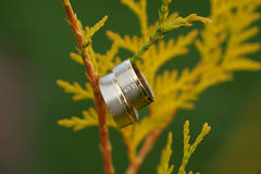 Wedding rings on branch Royalty Free Stock Images