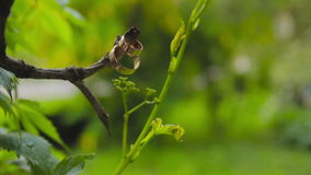 Wedding rings on a branch. Close up fototage stock video