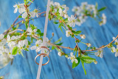 Wedding rings on a branch. Spring  bouquet of cherry flowers Stock Photo