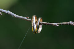 Wedding rings on a branch with web Stock Photography