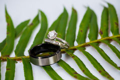Wedding Rings of the Bride and Groom Royalty Free Stock Photo